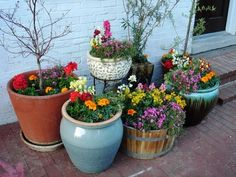 Potted flowers on a plot