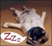 Shhhhhh leave him alone he is sleeping...ZZZZzzzzZ