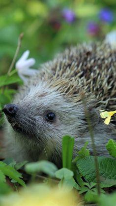 640x1136 Wallpaper urchin spines, grass, flowers--Um, that's a hedgehog