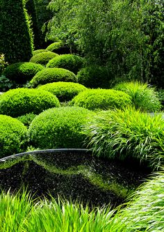 Chelsea Flower Show 2011 | Irish Sky Garden Designed by Diar… | Flickr Garden Hedges, Topiary Garden, Sky Garden, Bonsai Garden, Garden Cottage, Bonsai Trees, Chelsea Flower Show, Diarmuid Gavin, Modern Japanese Garden