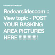 Redearslider.com :: View topic - POST YOUR BASKING AREA PICTURES HERE !!!!!!!!!!!!!!! Turtle Habitat, Habitats, Pictures, Photos, Grimm, Tortoise Habitat