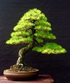 ♣♦A little #bonsai inspiration for the day!☺☺ #BonsaiInspiration