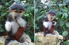 These Baby Monkey Bring Awareness To Endangered Primates