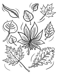 Printable fall leaves coloring page. Free PDF download at http://coloringcafe.com/coloring-pages/fall-leaves/.