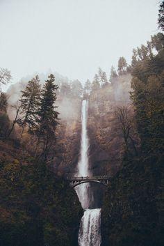 joliment, effrayant, forêt, nature, apparition, arbres, cascade