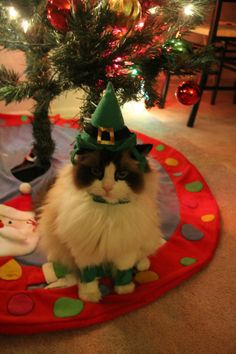 Santa's cutest elf!  For more Christmas cats, visit https://www.facebook.com/funholidaycats