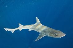 A Voice for the Voiceless: The 3rd Annual New Jersey Shark Blog! Now With More Sharks!