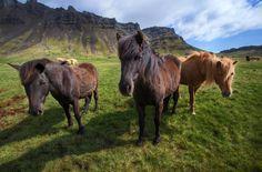 horse for desktop hd