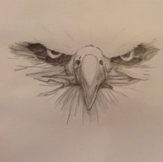 A close up sketch of a bald eagle