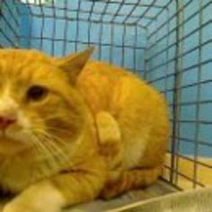 Brooklyn NY.  Mango.  Male.  3 years.  Dies in a.m.  See Pets on Death Row- Urgent Death on fb.***RESCUED***
