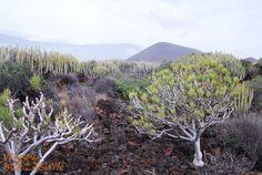 #Teneryfa Malpais de Guimar - jeden z ciekawszych obszarów lawy pahoehoe i aa na Wyspach Kanaryjskich.
