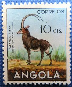 Angola's national icon, the Palanca Negra Gigante (Giant Sable), is considered to be the most beautiful living antelope in the world. And this species is found nowhere else in the world but in the miombo woodlands of Malanje.