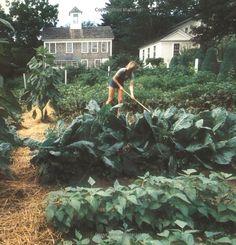 {<3} Martha in her garden // Entertaining: (1982) Martha Stewart's first Book.