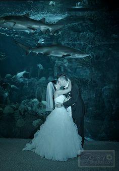 An intimate kiss. #thefloridaaquarium #weddings