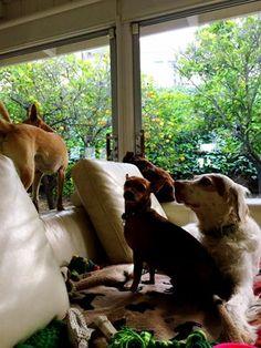 Toto, Daphne, Wolfie & Mac. All love...