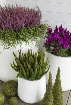 You Can Experience container gardening With One Of These Useful Tips