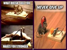 Never Give Up, Law Of Attraction, Funny Stuff, Bring It On, Make It Yourself, Humor, Memes, Smile, Animales