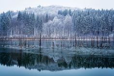 A pine forest—dusted with a light coating of new-fallen snow—is reflected off of Romania's Cuejdel Lake, a natural landslide dam.