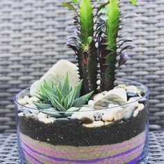 Cactus terrarium @ MissCellanous.ca