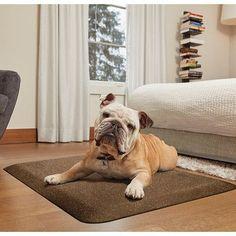 """WellnessMats Pet Mat Color: Golden Retreat, Size: Medium: (34"""" L x 20"""" W)"""