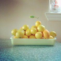 Meyer Lemons from the backyard of @neonbeach. #harvest #citrus #lemons