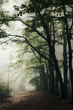Haunted Forest || Bob van den berg