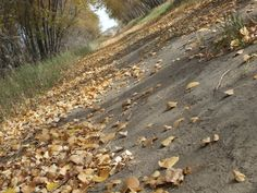 Nice dutch angle of a back road covered in leaves (:  (photograph by Simone Debler