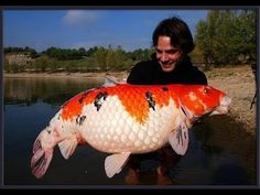 Koi Fish Discover When the past catches up with us we block our future-Brer Caleb PhD. when the past catches up with us we block our future-Brer Caleb PhD. Koi Fish Pond, Koi Carp, Fish Ponds, Betta Fish, Beautiful Fish, Animals Beautiful, Koy Fish, Animals And Pets, Cute Animals