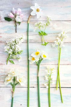 Botanical Photography Spring Flowers Fine Art by GeorgiannaLane
