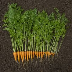 Cook with every part of the food. Turn your corn cob into broth, your broccoli stems into pesto, or your carrot greens into a salad. - Way To Waste Less Food Container Vegetables, Planting Vegetables, Growing Vegetables, Veggies, Growing Carrots, Broccoli Stems, Carrot Greens, Growing Tomatoes In Containers, Tomato Garden