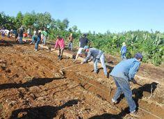 Jovens se unem para ensinar conceito de agroflorestas a produtores rurais