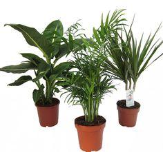 Geschenk einzug pflanze