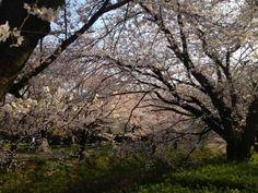 御用水跡街園(名古屋)