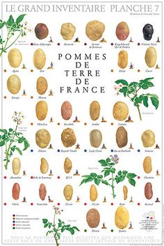 HOME EC - the potatoes of france -- food art illustration Botanical Illustration, Illustration Art, Nature Posters, Food Charts, Fruit Art, Fruit And Veg, French Food, Picture Collection, Food Illustrations