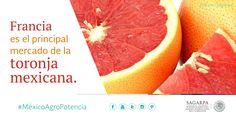 Francia es el principal mercado de la toronja mexicana. SAGARPA SAGARPAMX #MéxicoAgroPotencia