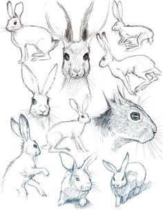 40 Free & Easy Animal Sketch Drawing Information and Ideas - Brighter Cra . - 40 Free & Easy Animal Sketch Drawing Information and Ideas – Brighter Craft – - Bunny Sketches, Drawing Sketches, Drawing Drawing, Sketch Art, Sketching, Anatomy Drawing, Anime Sketch, Easy Animal Drawings, Easy Drawings