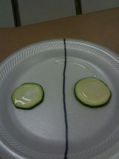 biology Showing osmosis with cucumber slices, salt and sugar Science Cells, Plant Science, Science Biology, Science Education, Life Science, Cell Biology, Ap Biology, Forensic Science, Higher Education