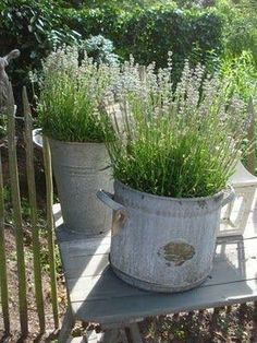 Large galvanized tubs with lavender or citrus plants (to keep the mosquitos away).