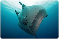 Great scuba diving company in Costa Rica