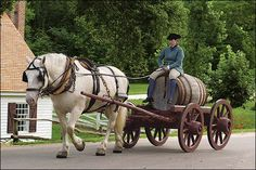 Ben, an American Cream draft horse, does the heavy lifting, or pulling, for Joyce Henry of Colonial Williamsburg's coach and livestock program, perched on a water wagon in the Historic Area.