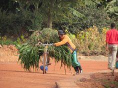 burundi-east-africa-pushing-a-load-on-a-bike
