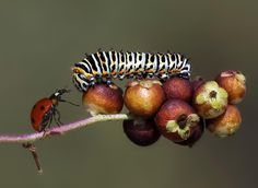 sniffing each other by Savas Sener on 500px