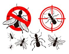 Pests today have grown in number and have become a nuisance for everyone. There are several reasons for the sudden increase in pests, pest control bandra west Green Pest Control, Best Pest Control, Pest Control Services, Bug Control, Mosquito Control, Pest Solutions, Bees And Wasps, Humming Bird Feeders, Bed Bugs