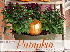 This little DIY pumpkin doubles as a decoration and a self-watering system for your fall plants!