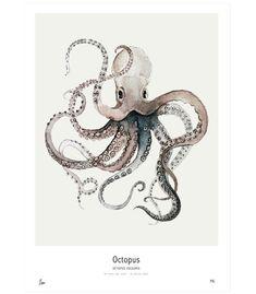 """Vulgaris"""" print by Maaike Koster of My Deer Art Shop., """"Octopus Vulgaris"""" print by Maaike Koster of My Deer Art Shop., """"Octopus Vulgaris"""" print by Maaike Koster of My Deer Art Shop. Octopus Print, Octopus Octopus, Octopus Drawing, Octopus Painting, Deer Drawing, Drawing Art, Octopus Tattoos, Cute Octopus Tattoo, Squid Tattoo"""