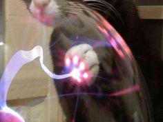 猫の肉球が光るプラズマボール:ハムスター速報
