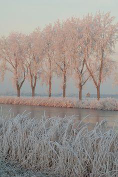 Pink sunlight on frozen trees