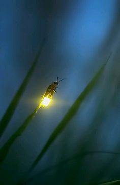 La luciole va éteindre la lumière maintenant. Elle est fatiguée d'avoir fait son Show tout l'été dans l'obscurité. Elle clignote maintenant comme une vieille ampoule, sans être certaine d'avoir réellement existé.