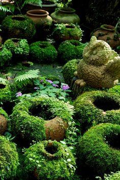 Make DIY Moss Covered Pots With Living Paint - Garden Care, Garden Design and Gardening Supplies Moss Paint, Paint Pots, Growing Moss, Garden Figurines, Pot Jardin, Woodland Garden, Shade Garden, Dream Garden, Organic Gardening