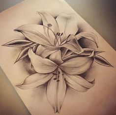 Lily tattoo: value for men and women, sketches and origina .- Lily Tattoo: Wert für Männer und Frauen, Skizzen und Originalfarben – diy tattoo images Lily tattoo: value for men and women sketches and original colors - Tattoo Lily, Lily Tattoo Sleeve, Lily Tattoo Meaning, Lilly Flower Tattoo, Calla Lily Tattoos, Tiger Lily Tattoos, Lily Tattoo Design, Small Flower Tattoos, Flower Tattoo Designs